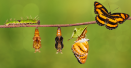 Butterflies on a tree branch. | Product Lifecycle Management (PLM)